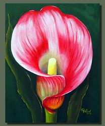 Art: Pink Calla Lily by Artist Rita C. Ford