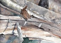 Art: Winter Wren by Artist Steve Hamlin