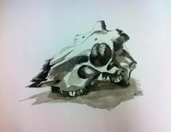Art: Crops drawing skull by Artist Saskia Franken-Saers