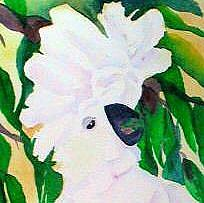 Detail Image for art I'm So Pretty - Umbrella Cockatoo
