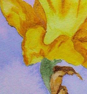 Detail Image for art SUNSHINE DAFFODIL
