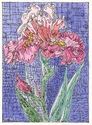 Art: PINK IRIS by Artist Theodora Demetriades