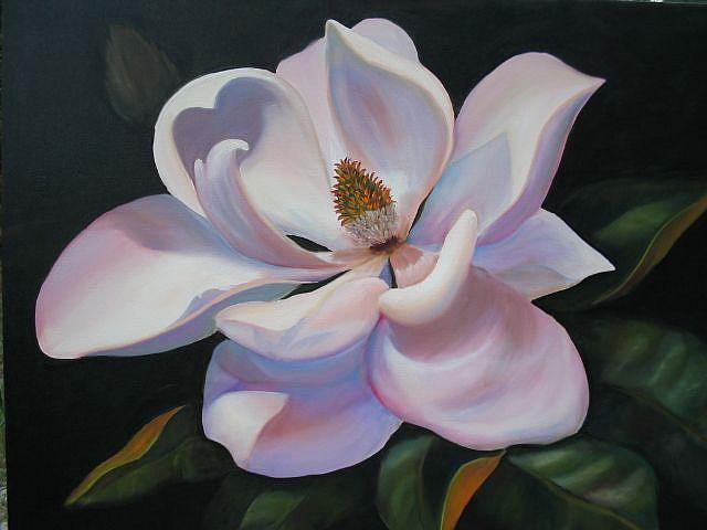 Magnolia -sold - by Ke Robinson from TROPICAL FLOWERS