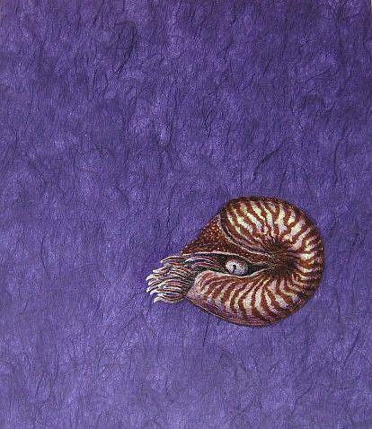 Art: Chambered Depths by Artist Jackie K. Hixon