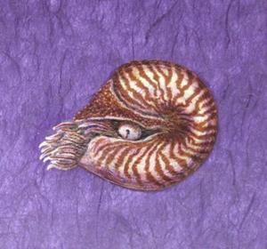 Detail Image for art Chambered Depths