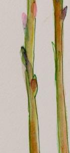 Detail Image for art Asparagus II