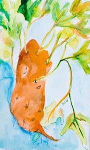 Detail Image for art Sweetpotatoe