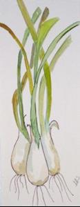 Detail Image for art Long Onions