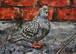 Art: Street Pigeon by Artist Melinda Dalke