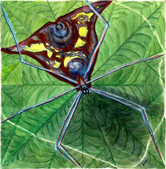 Art: spiderstudy.jpg by Artist Caroline Lassovszky Baker
