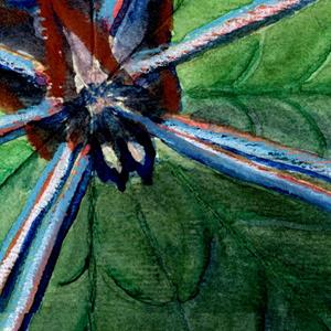 Detail Image for art spiderstudy.jpg