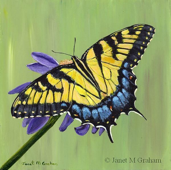 Art: Tiger Swallowtail Butterfly by Artist Janet M Graham