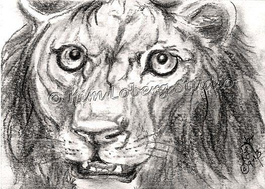 Art: Charcoal Lion by Artist Kim Loberg
