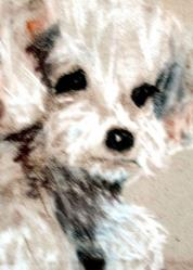 Art: Curious Callee by Artist L. M. McCurdy