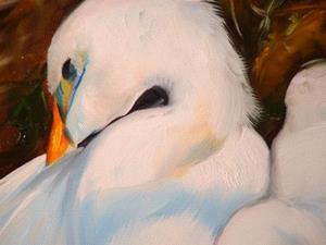 Detail Image for art GREAT WHITE EGRETS