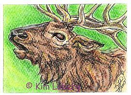 Art: Bull Elk SOLD by Artist Kim Loberg
