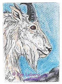 Art: Rocky Mountain Goat SOLD by Artist Kim Loberg
