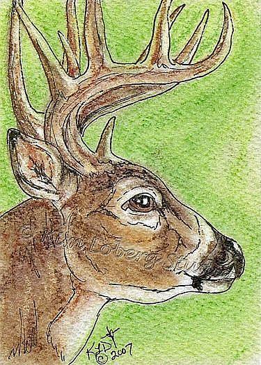 Art: Whitetail/Buck SOLD by Artist Kim Loberg