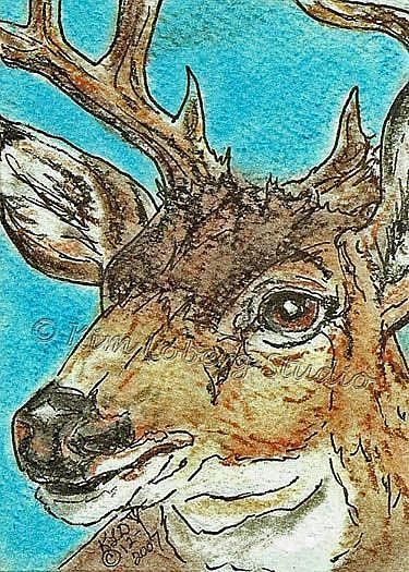 Art: Mule Deer/Buck SOLD by Artist Kim Loberg
