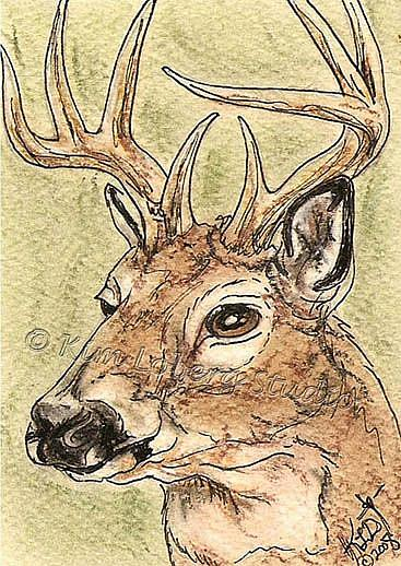 Art: Alert Buck SOLD by Artist Kim Loberg