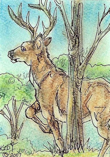 Art: Whitetail Buck SOLD by Artist Kim Loberg
