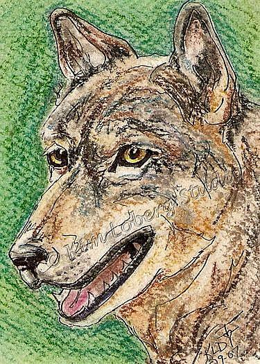 Art: Wolf SOLD by Artist Kim Loberg