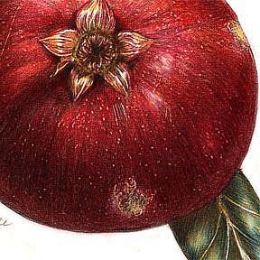 Detail Image for art Botanical Pomegranate