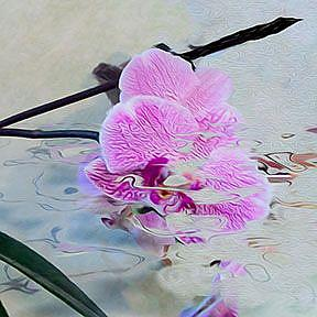 Detail Image for art Wild Orchid