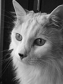 Detail Image for art Feline Mahjong Rip