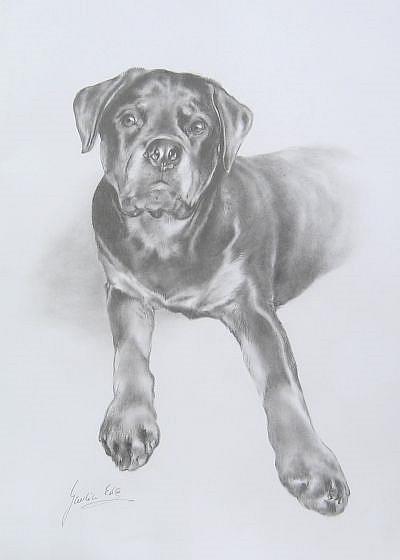 Art: Portrait of the dog by Artist Ewa Kienko Gawlik