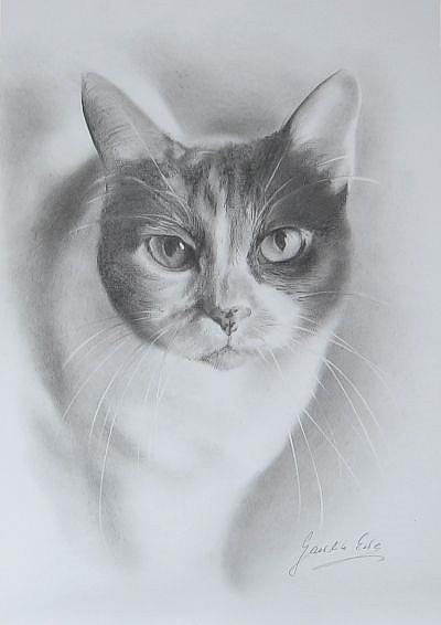 Art: The Portrait of the Cat by Artist Ewa Kienko Gawlik
