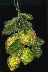 Art: My Lemon Tree by Artist Naquaiya