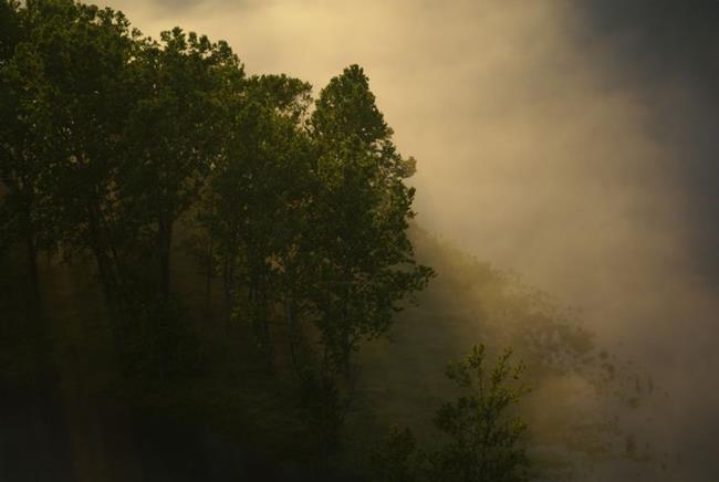 Art: The Light Shines Through by Artist Lisa Miller