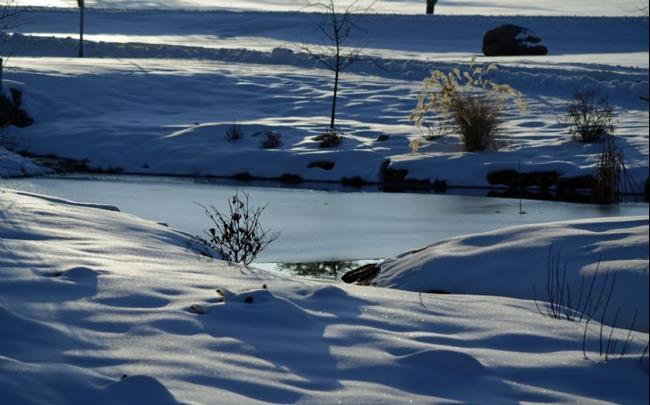 Art: Frozen Pond by Artist Lisa Miller