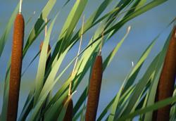 Art: Cattails...RIP by Artist Lisa Miller
