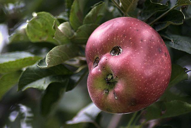 Art: Happy Apple by Artist Lisa Miller