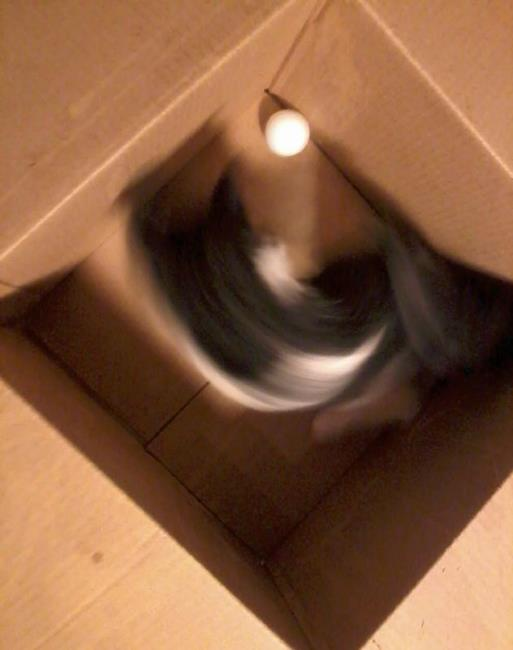 Art: 3 legged kitten in box with ball #1 by Artist Tracey Allyn Greene