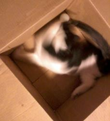 Art: 3 legged kitten in box with ball #2 by Artist Tracey Allyn Greene