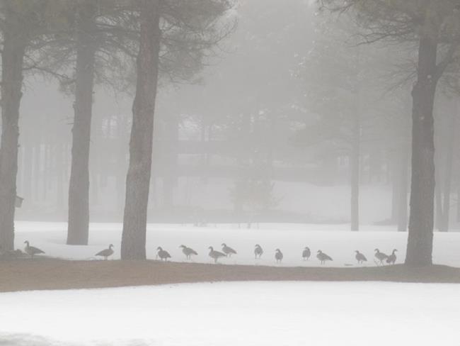 Art: Foggy Snow Geese by Artist Diane Funderburg Deam