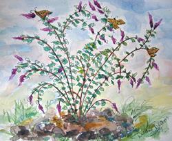 Art: Munds Park Butterfly Bush by Artist Diane Funderburg Deam