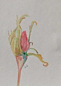 Art: Rose Bud by Artist Delilah Smith