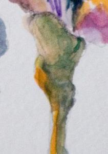 Detail Image for art Purple Iris