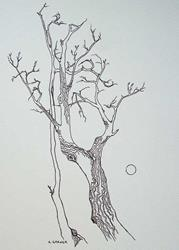 Art: tree study #6 by Artist Angie Reed Garner