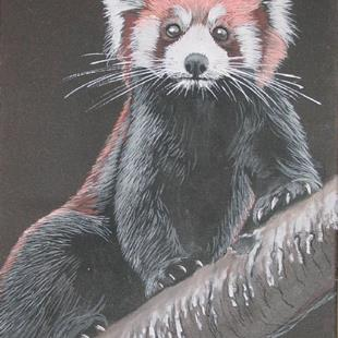 Art: Red Panda by Artist Denis Gloudeman