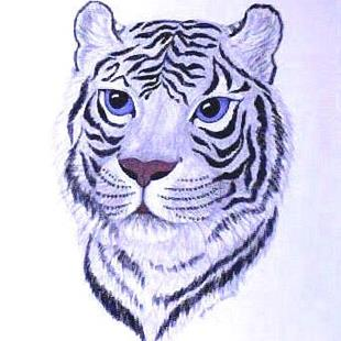 Art: Tiger Profile by Artist Jackie K. Hixon