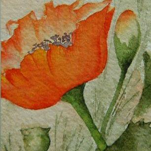 Art: Poppies, Blooms & Buds by Artist Deborah Leger