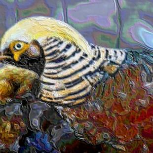 Art: Male Golden Pheasant  by Artist W. Kevin Murray