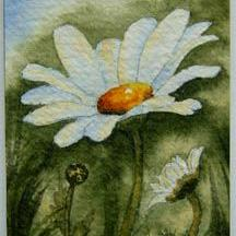 Art: Daisy Series, Card 4 by Artist Deborah Leger