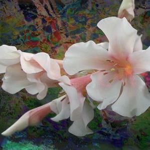 Art: Beauty by Artist Carolyn Schiffhouer