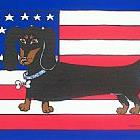 Art: Doxie USA by Artist Melanie Douthit